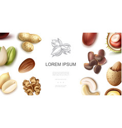 realistic natural nuts concept vector image