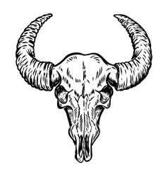 buffalo skull isolated on white background vector image