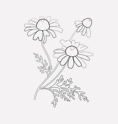 chamomile icon line element vector image