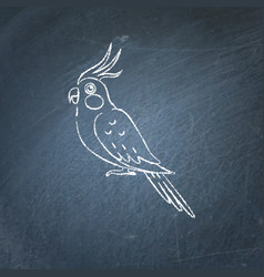 corella parrot icon sketch on chalkboard vector image vector image