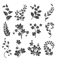 Curly branches silhouettes with leaves vector