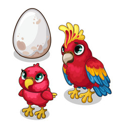 Family parrots parent baand egg vector