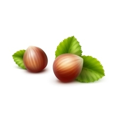 Full Unpeeled Hazelnuts with Leaves vector image