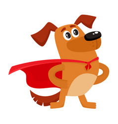 funny dog character in red cape standing as hero vector image