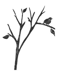 Silhouette one bird on a branch figure sketch vector