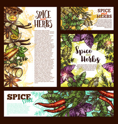 Spice herb and aromatic vegetable sketch banner vector