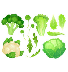 cartoon cabbages fresh lettuce leaves vegetarian vector image
