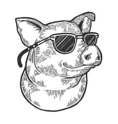 Pig animal in sunglasses sketch engraving vector