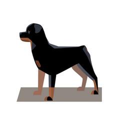 rottweiler minimalist image vector image