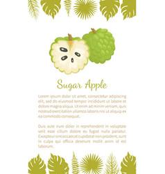 Sugar-apple sweetsop custard apple poster text vector