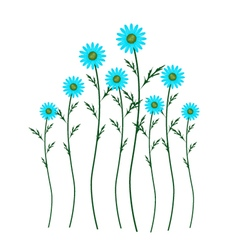 Light Blue Daisy Blossoms on White Background vector image