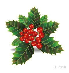 Beautiful holly christmas branch vector