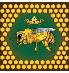 Bee color honey vector