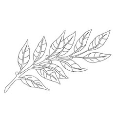 Botanical branch line sketch vector
