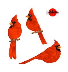 Cardinal birds - a symbol christmas vector