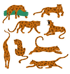 Set isolated leopard icons vector