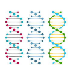 Three variants double strand dna molecules vector