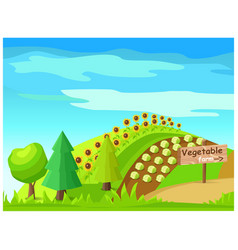 Vegetable farm with harvest on field vector