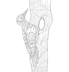 Woodpecker coloring for adults vector image
