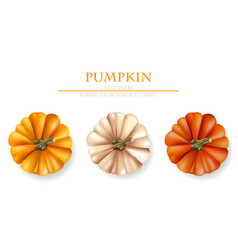 autumn pumpkins realistic banner layout vector image