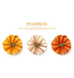autumn pumpkins realistic banner layout vector image