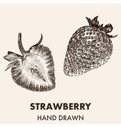 Sketch strawberry Hand drawn Fruit collection vector image