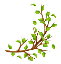 Summer branch of tree and green leaves seasonal vector
