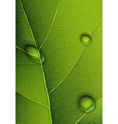 droplets on leaf vector image