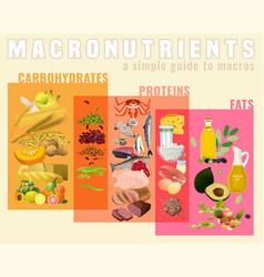 Main food groups vector
