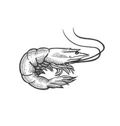 Shrimp sea animal sketch engraving vector