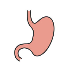 Stomach color icon vector