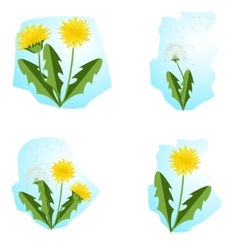 dandelions set with leaves vector image