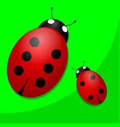 two ladybugs vector image