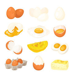 chicken egg set farm natural fresh ingredient vector image