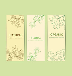 Collection herbal banner vector