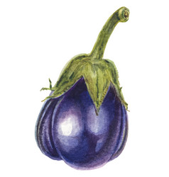 Fresh eggplant vegetable with stem or aubergine vector
