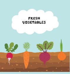 Fresh organic vegetable garden on blue sky vector