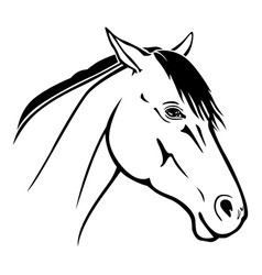 horse muzzle portrait vector image
