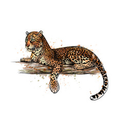 Leopard is lying on a tree from a splash vector