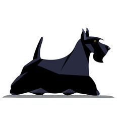 Scotch terrier minimalist image vector