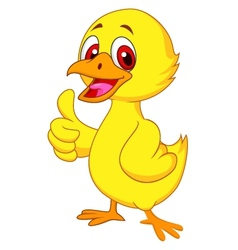 Cute baby chicken with thumb up vector image vector image