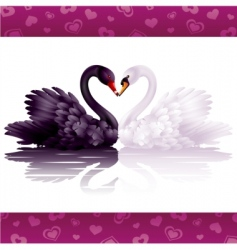 two graceful swans in love vector image