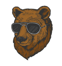 Bear animal in sunglasses color sketch engraving vector