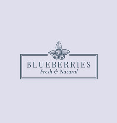 blueberries abstract sign symbol or logo vector image