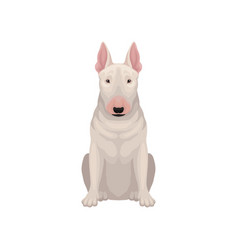 Portrait of sitting bull terrier dog with egg vector