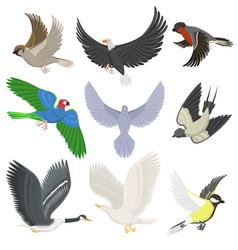 set of different wing wild flying birds cartoon vector image