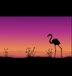 collection stock flamingo silhouette scenery vector image