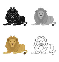 a lion a wild and ferocious predator leo the vector image