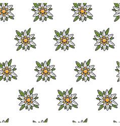 Edelweiss wild flower austrian symbol seamless vector