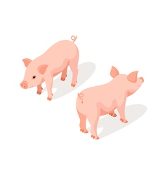 Isometric 3d of small pink cute pig vector image